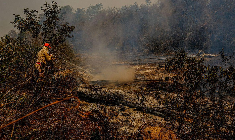 Queimadas no Pantanal destruíram o equivalente a 444 campos de futebol
